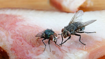 What Really Happens When a Fly Lands on Your Food