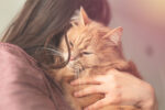 Who Would You Rather Save, A Cat Or A Criminal? If You Chose Cat, You Are Not Alone