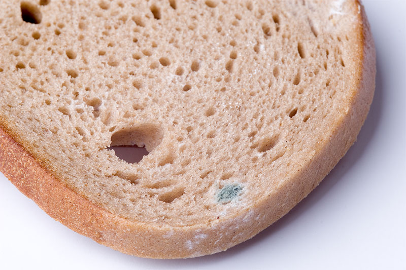 Never Eat The 'Clean' Part Of Moldy Bread. Here's Why