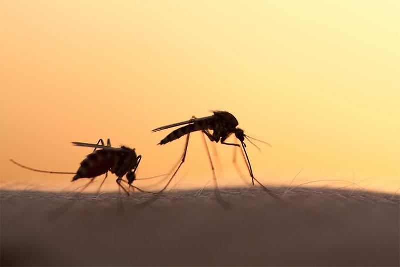 Mosquitos Like Type O Blood