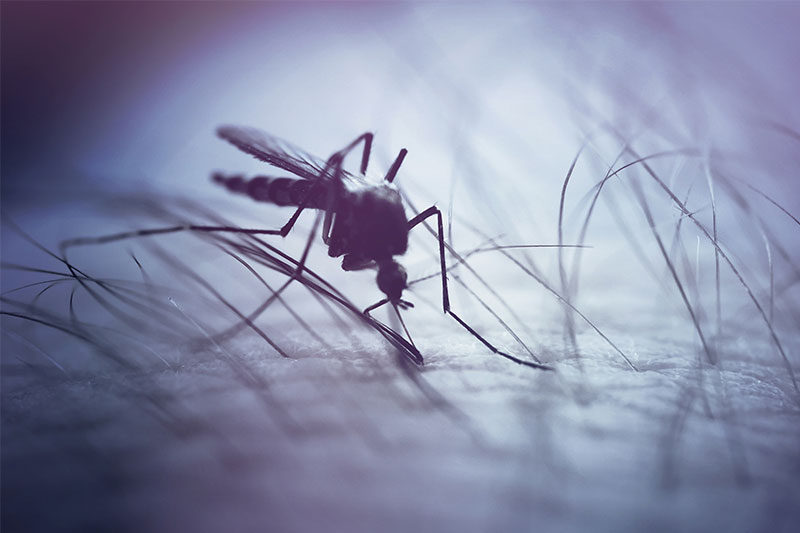 Why Does Your Body React A Certain Way When Mosquitos Bite?