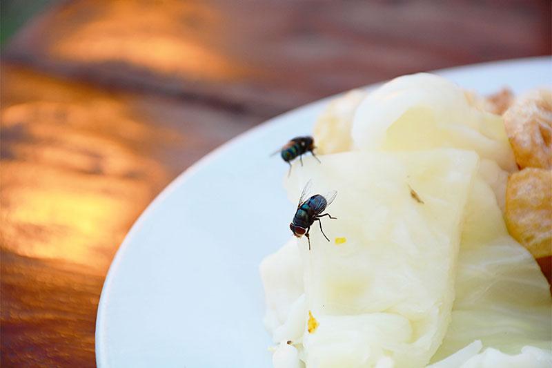 How To Keep Flies Away?
